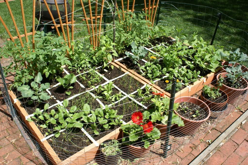 Square Foot Heirloom Vegetable Garden