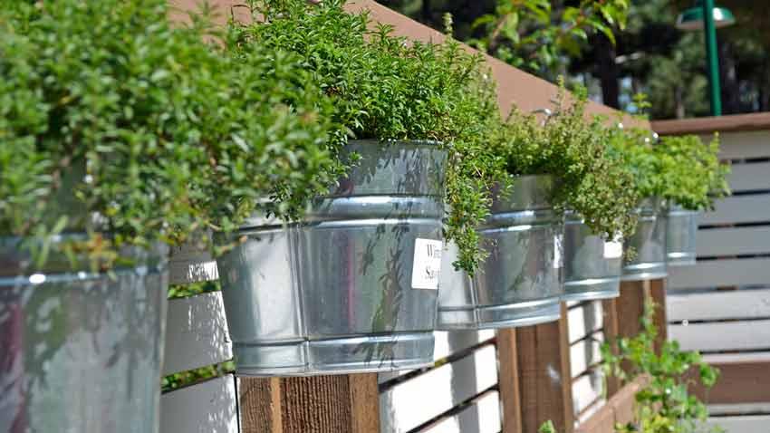 Famous Forest Highlands Kitchen Garden | Terroir Seeds VB57