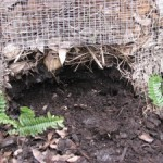 Compost- Nourishing Your Garden Soil