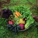 How to Plan for Fall and Winter Gardening