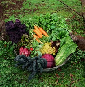 Heirloom Vegetable Basket