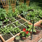 Square Foot Heirloom Vegetable Garden