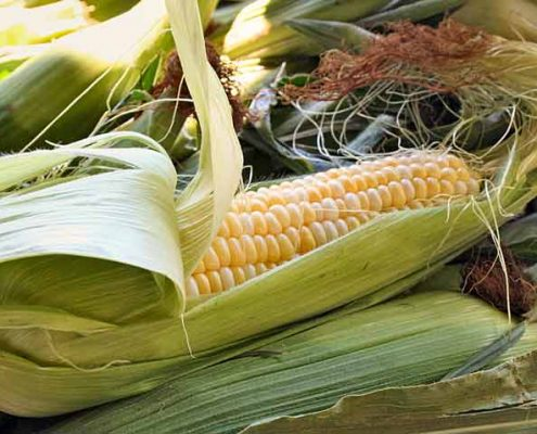 Heirloom Sweet Corn