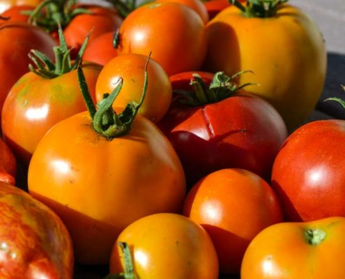 Picking Perfectly Ripe Heirloom Vegetables