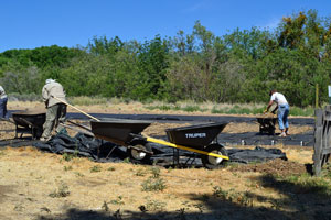 Spreading Mulch for Milkweed plugs