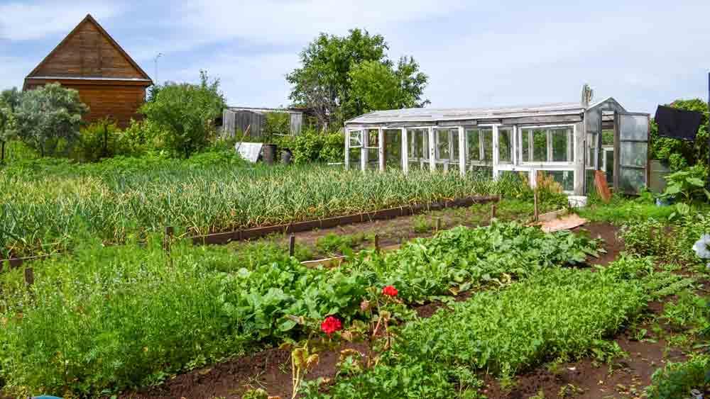 Russian Dacha Garden with Greenhouse