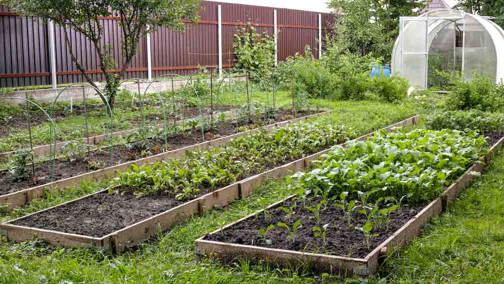 Russian Dacha Garden with Raised Beds