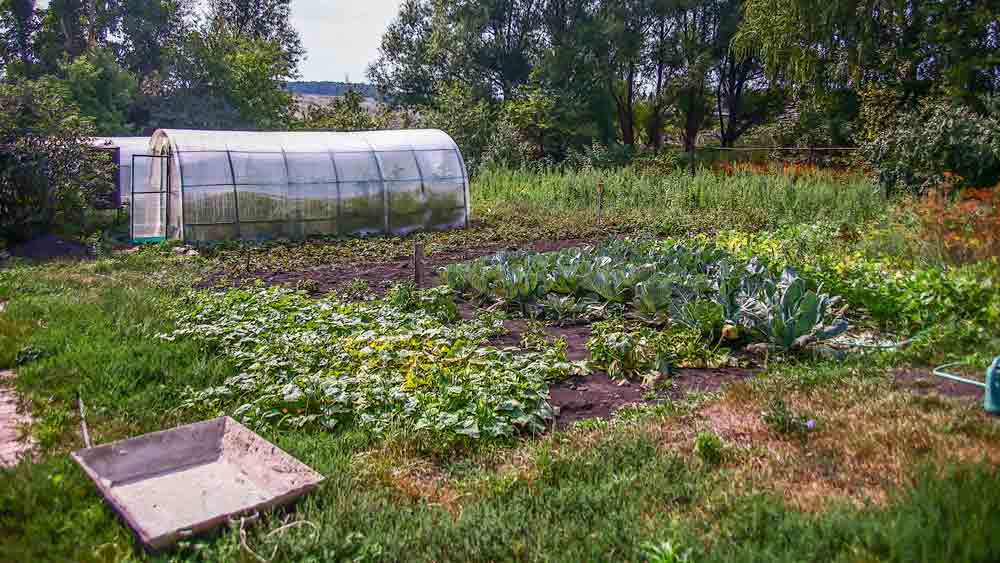 Russian Dacha Garden with Cold Frame