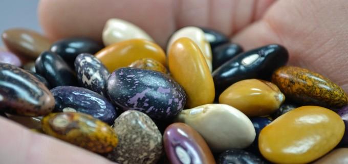 Ayocote de Camote Beans