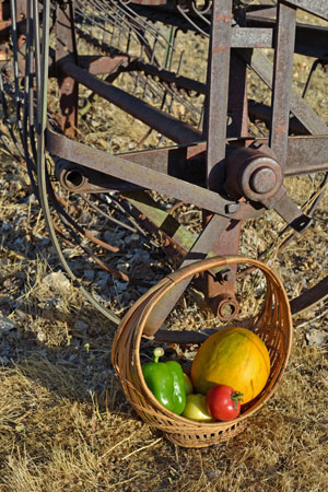 Farm Woman Melon Basket