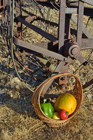 Farm Woman Melon Basket