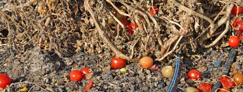 Garden Cleanup for Pests and Disease