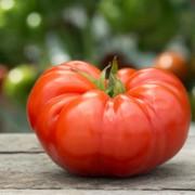 Cuostralee Tomato