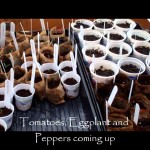 2011 Terroir Seeds Growing Season Update- 3/6/2011