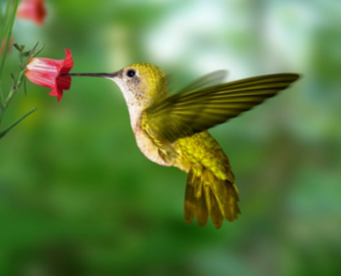 Hummingbird Butterfly Mix