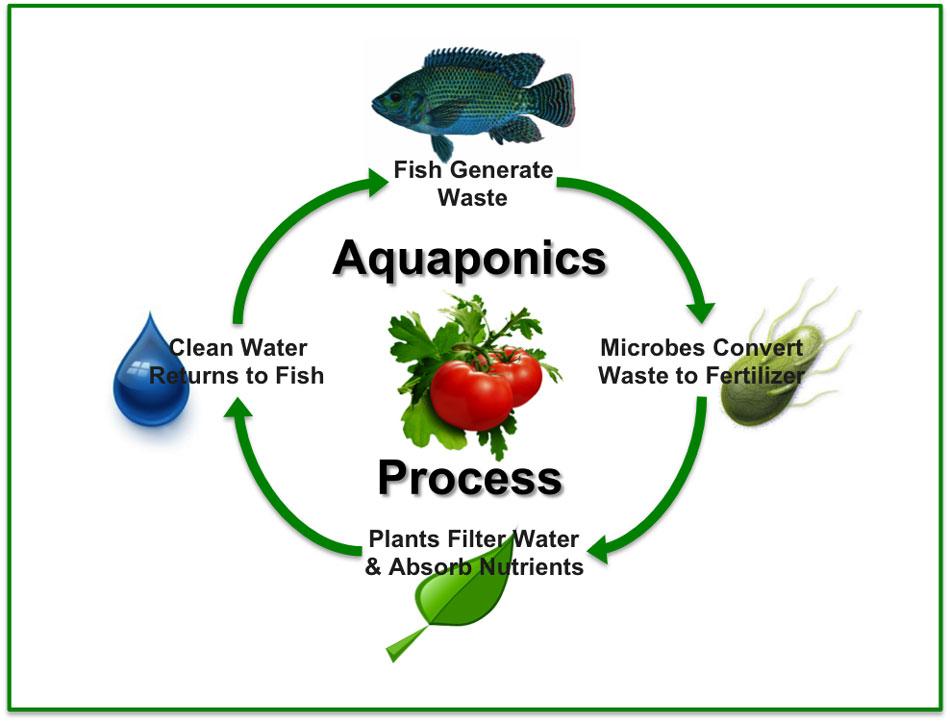 Aquaponics Process