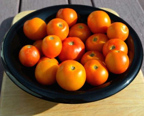 Juane Flamme Tomato