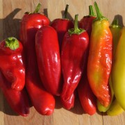Hungarian Hot Wax Pepper2