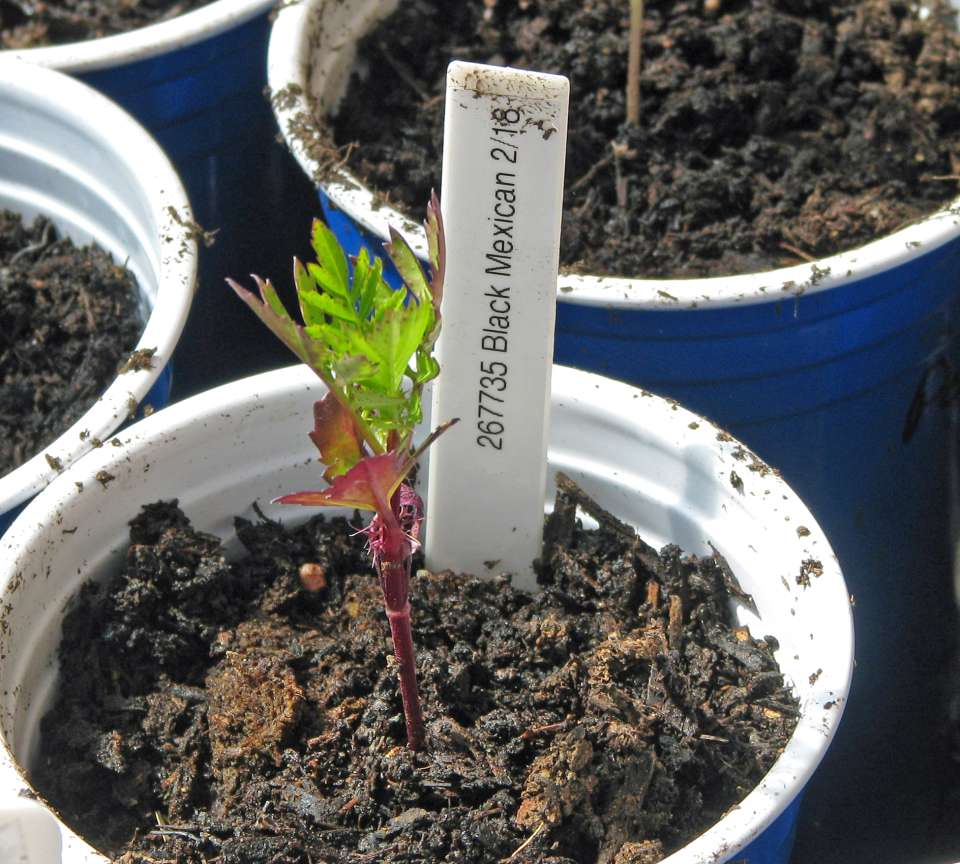 What Happened To My Seed Germination Terroir Seeds