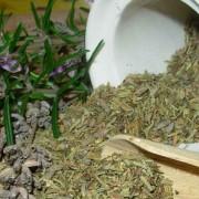 Indoor Herbs
