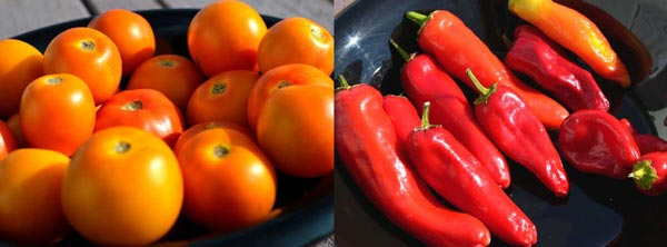Heirloom Tomatoes & Peppers