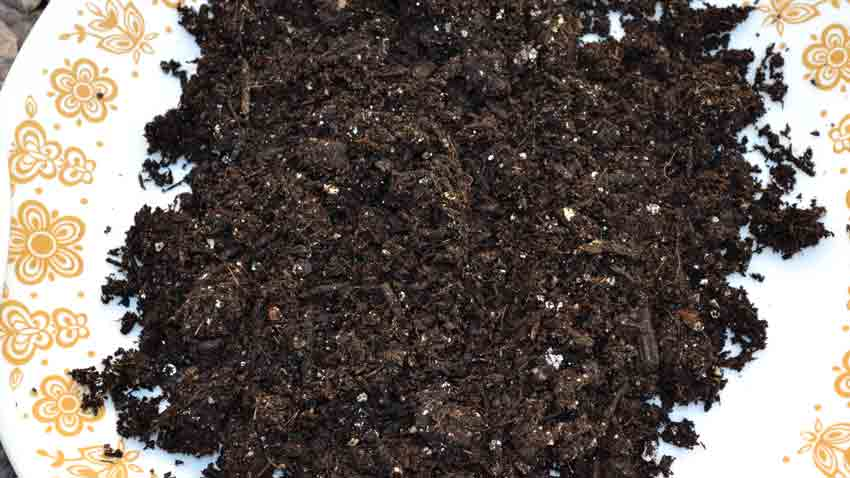 Potting soil makeup makeup vidalondon for Garden soil or potting soil