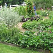 Seed Savers Exchange Garden