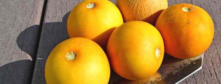 Ripe Vine Peaches