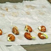 Seed Germination at Seed Savers Exchange