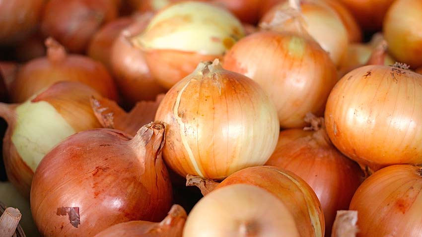 how to onion starts form mature onions jpg 853x1280
