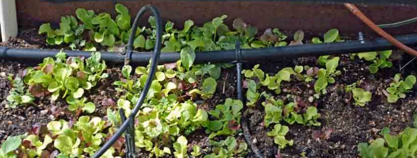 Lettuce Shade Detail