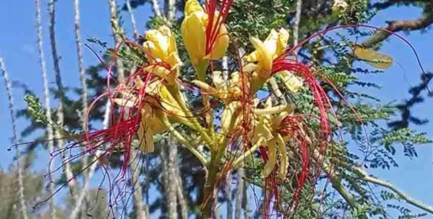 Blooms - Ethel M Botanic Garden