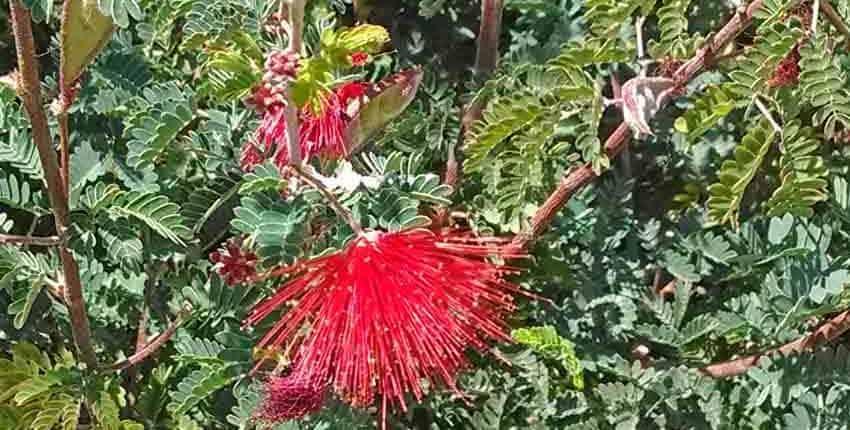 Ethel M Botanic Garden