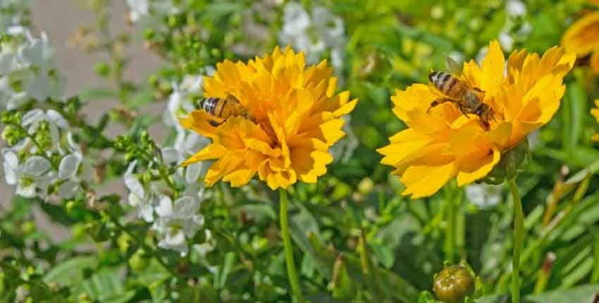 Bees enjoying themselves