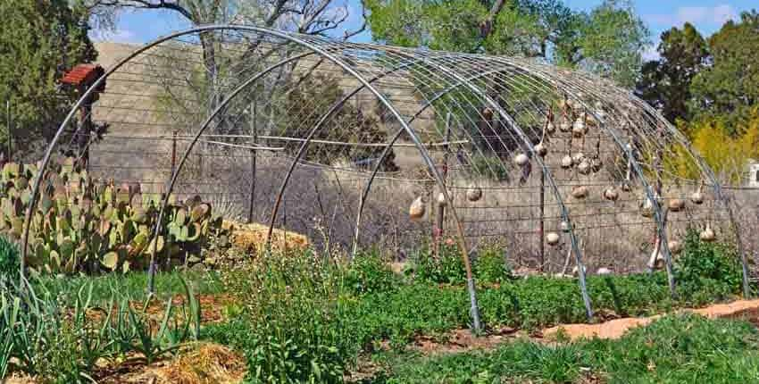 Cattle panel hoop house