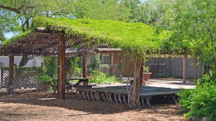 Living shade structure