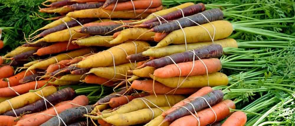 Rainbow of Heirloom Carrot Colors