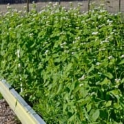 Garden Cover Up Mix Cover Crop