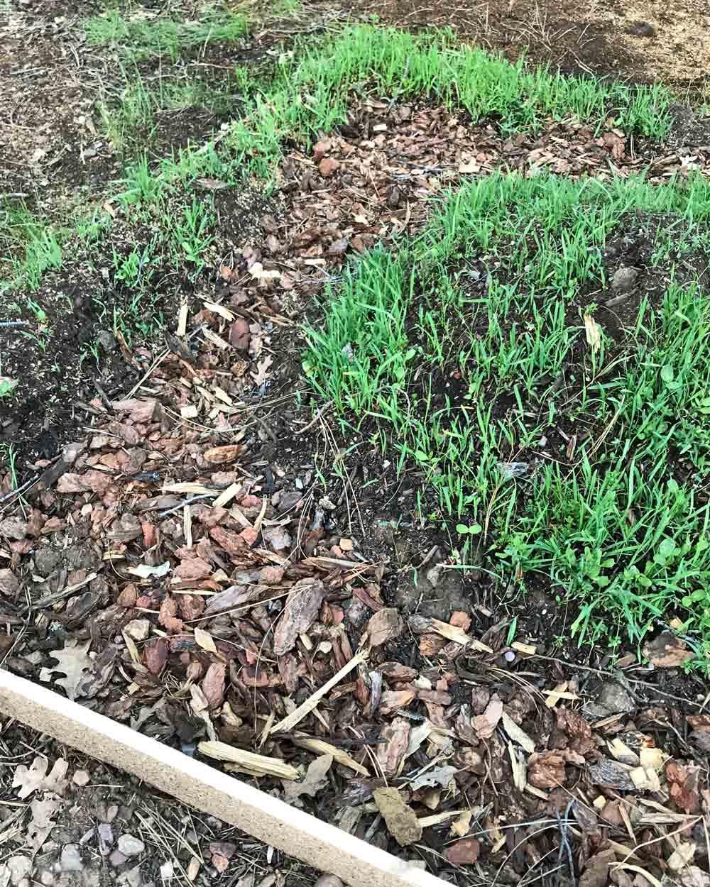 Soil Builder Mix cover crop