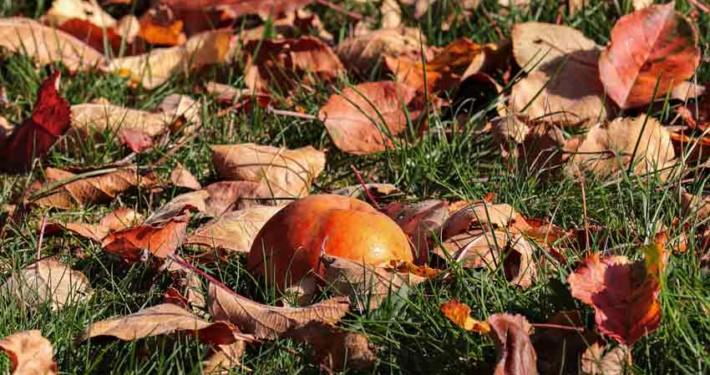 November-Planting-Guide